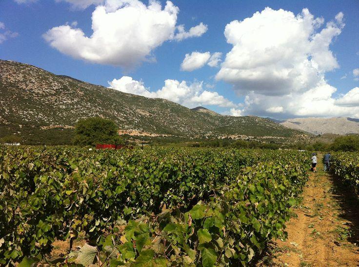 Bosinakis Winery, Arcadia, Greece