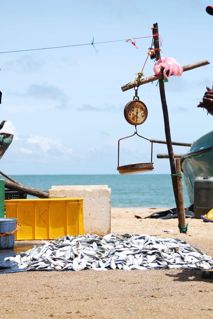 Vis, vers gevangen vis op de vismarkt bij Galle, Sri Lanka