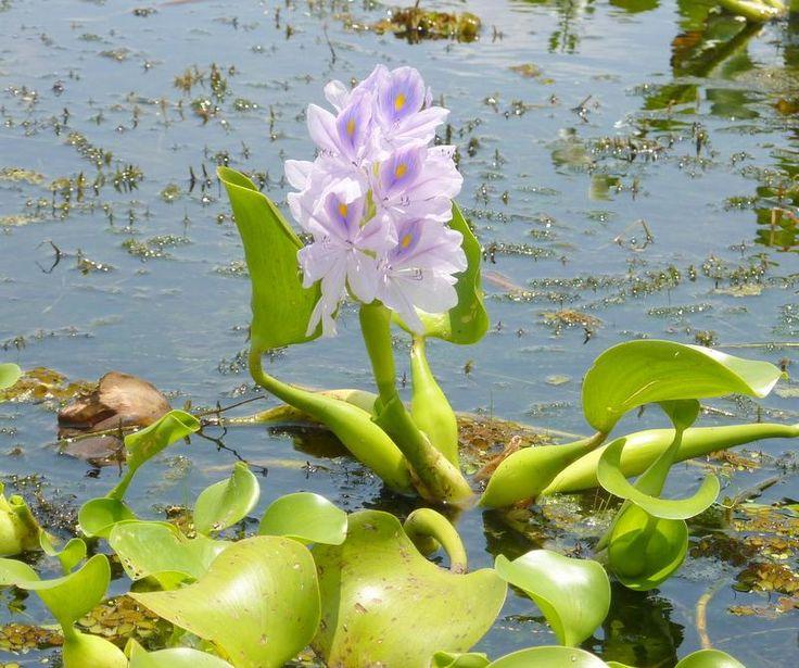 Ma fleur du lundi ! Une fleur pour égayer votre semaineFlower power21 Bonjour Cher Lecteur ! Et voici aujourd'hui le bouquet final de cette belle aventure photographique !!!!! Nous allons …