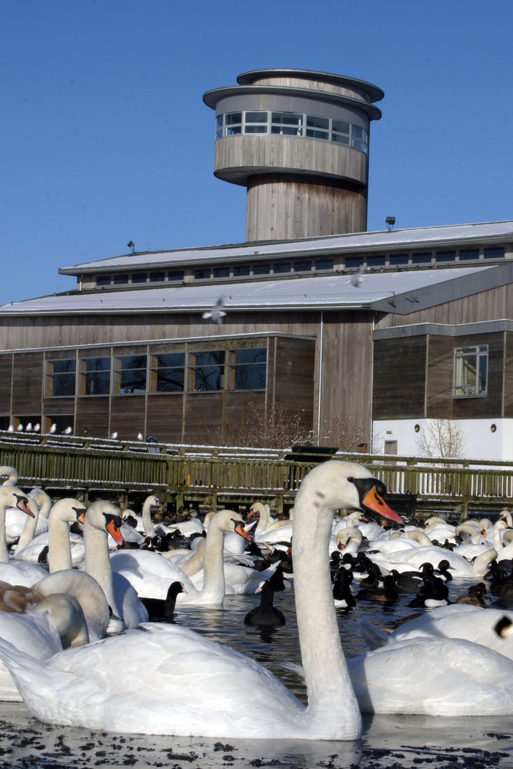 Slimbridge Wildfowl Trust - distance from BEST WESTERN The Gables: approx 9 miles.