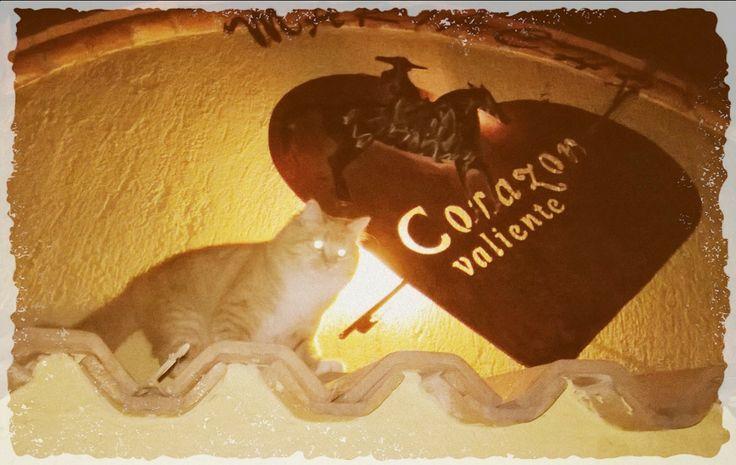 Leonny la hermosa mascota del Mariachi Corazon Valiente de Temascalcingo Mexico
