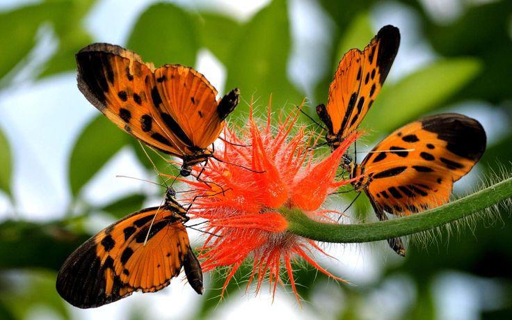 kartinki24_ru_butterflies_89.jpg (1920×1200)