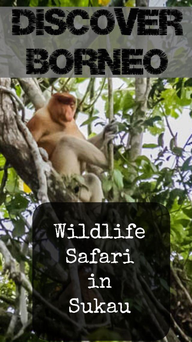 Wildlife Safari in Borneo #travel #wildlife #monkeys #birds #discover #adventure #Borneo