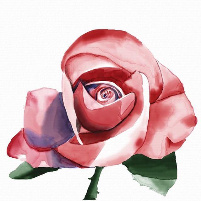 By Kedar Degade created on iPad using Auryn Ink #aurynink #watercolor #digitalwatercolor #ipadart  #rose