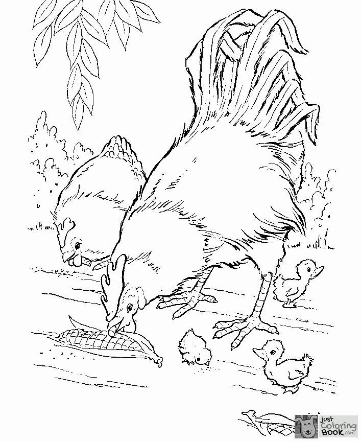 Animal Coloring Realistic Hen And Rooster Farm Animal Coloring Regarding Printable Chicke Farm Coloring Pages Farm Animal Coloring Pages Chicken Coloring Pages