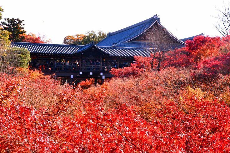 東福寺通天橋 ~京都の紅葉 Tofuku-ji Temple Tsutenkyo,Kyoto