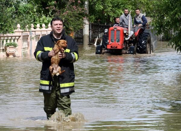 #UnsungHeroes: Emergency worker in Serbia-Bosnia flood save dog from drowning...