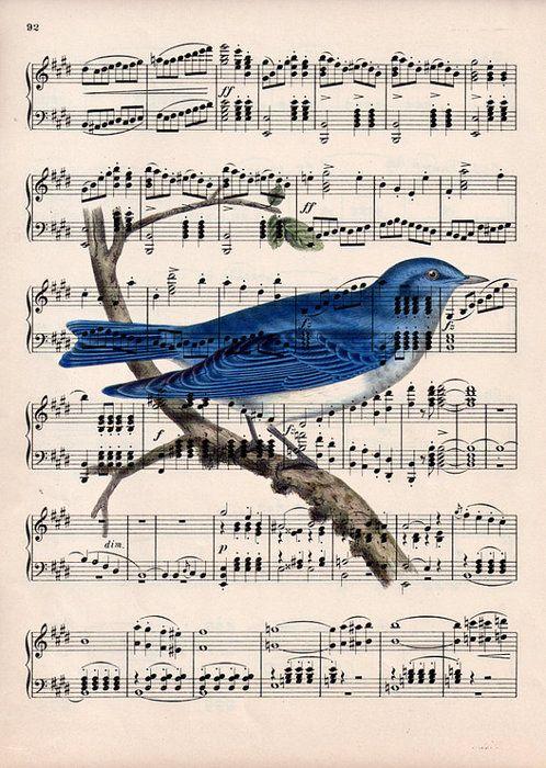 pájaro partitura