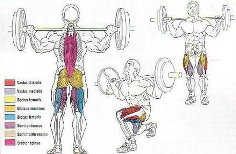 walking lunges muscles worked google search body