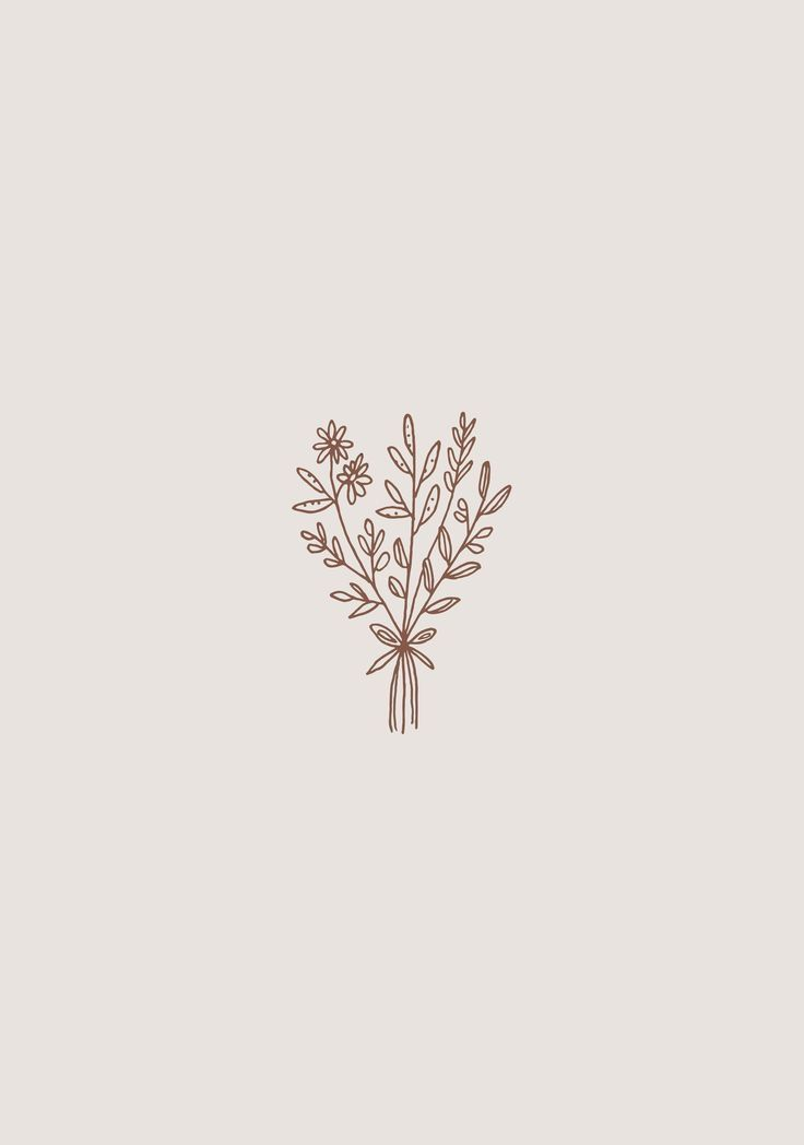 Illustrations Flower Drawing Botanical Illustration Minimalist Wallpaper