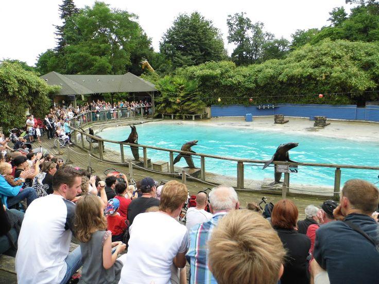 Sa ses mes amours du zoo de la Flèche voici Lucky,Wally,Cokkie et jimmy. Je les aime tous❤❤❤❤❤❤❤❤❤❤❤❤❤❤❤❤♥❤