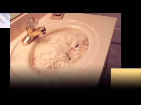 Приколы с котами: смешные фото спящих котов и кошек