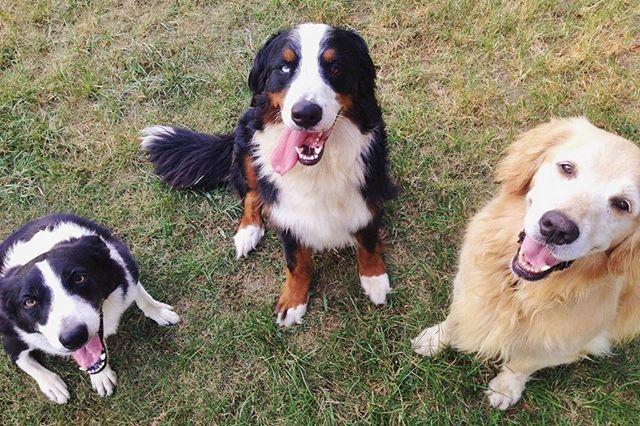 hcpsafari 本日11月1日は #犬の日 ∪・ω・∪ わん!わん!わん! みんないい笑顔です♪ #姫路セントラルパーク #犬 #himejicentralpark #dog 姫路セントラルパーク 2017/11/01 11:50:43