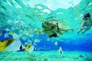 http://www.traveladvisortips.com/top-10-key-west-snorkeling-tours/ - Top 10 Key West Snorkeling Tours