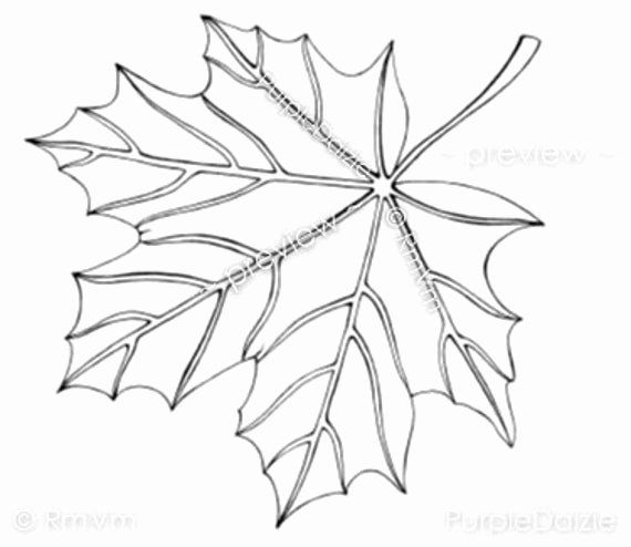 24 Maple Leaf Coloring Page In 2020 Leaf Coloring Page Leaf