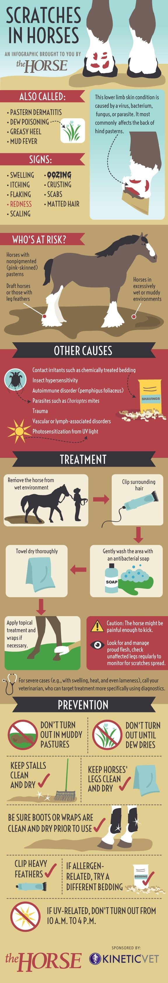 Scratches in Horses: Discover the possible causes of scratches and how you can prevent and treat this frustrating dermatitis often found on a horse's pastern in our step-by-step visual guide.