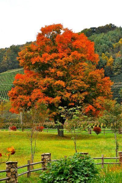 Fall...Beautiful October Colors