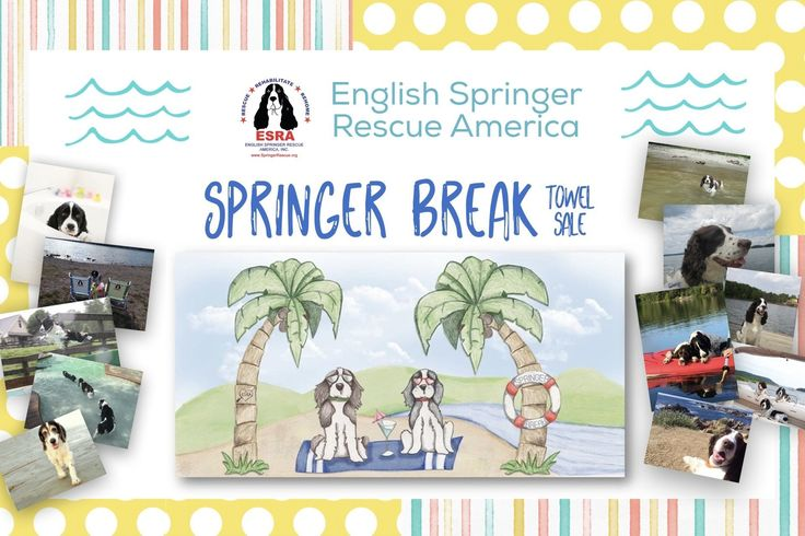 English Springer Rescue America Online Store