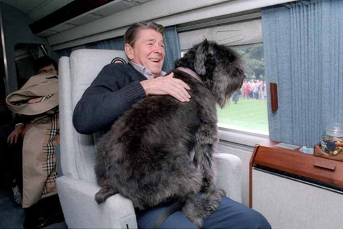 Ronald Reagan's dog   Lucky sits in Reagan's lap in the presidential helicopter. 1985. (Ronald Reagan Library): White Houses, Presidenti Pet, U.S. Presidents, Presidential Pets, Houses Pet, Photo, Presidents Ronald, Dogs Lucky, Ronald Reagan