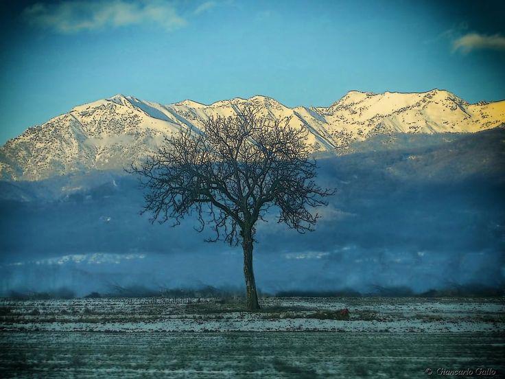 Tree by Giancarlo Gallo