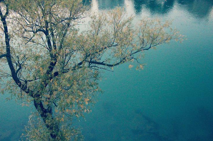 https://www.flickr.com/photos/127801639@N06/shares/04ha73 | Foto di francesca filotto | #brenta #river