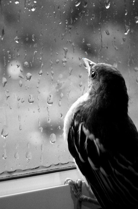 Wings of hope are really what you see. You can see the bird hoping that the weather will get better, that he'll be able to fly. Words: Bird, rain, black, window, cold, hope, wings, beak.