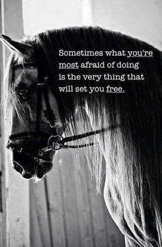mooie paarden spreuken Purpletugboat | Mooie/grappige en leuke teksten | Pinterest  mooie paarden spreuken