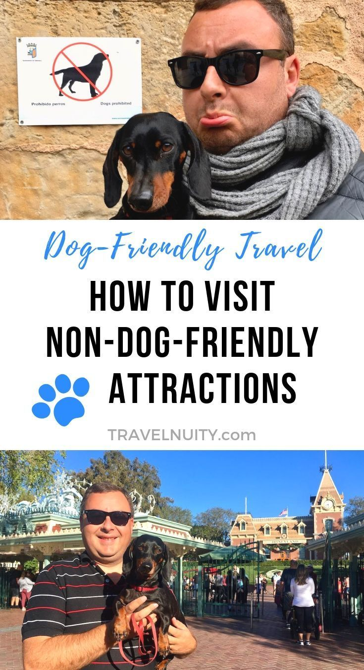 What To Do When Visiting Non Dog Friendly Attractions Dog Friends Dog Travel Accessories Pet Travel