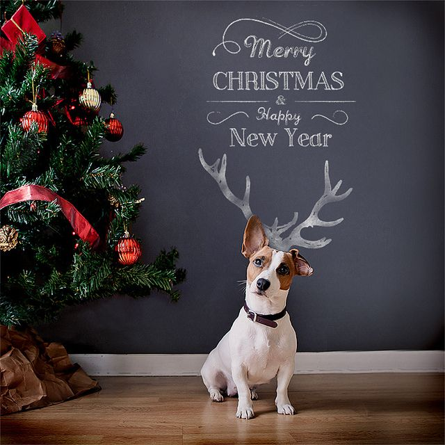 For next year's Christmas cards! Merry Christmas and Happy New year ! by mattguegan, via Flickr
