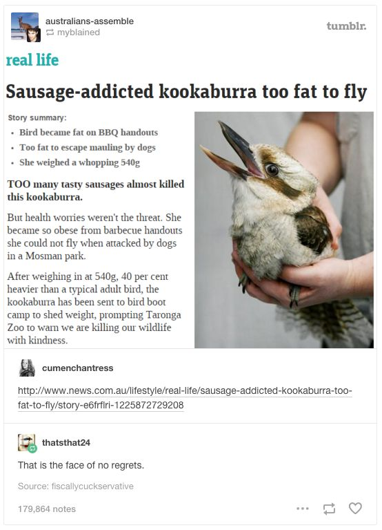 This relatable as hell kookaburra. | 29 Times Tumblr Just Couldn't Take Australian Animals Seriously