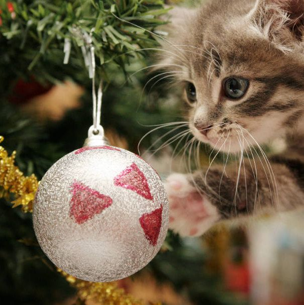 repel cat from christmas treechristmas ornaments stop cat playingno cat scratchcat away spraycat scratchingcat suppliescat deterrent christmas tree - How To Keep Cat Away From Christmas Tree