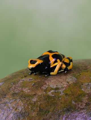 Jewels of the forest: The fascinating world of tree frogs