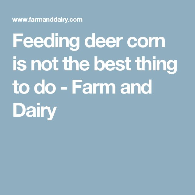 Feeding deer corn is not the best thing to do - Farm and Dairy