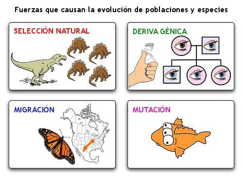 30. Procesos naturales biológicos-selectivos que producen en los descendientes cambios radicales. Estos mecanismos son el aislamiento geográfico, la deriva genética, la migración, la mutación, la selección natural y la variación genética.