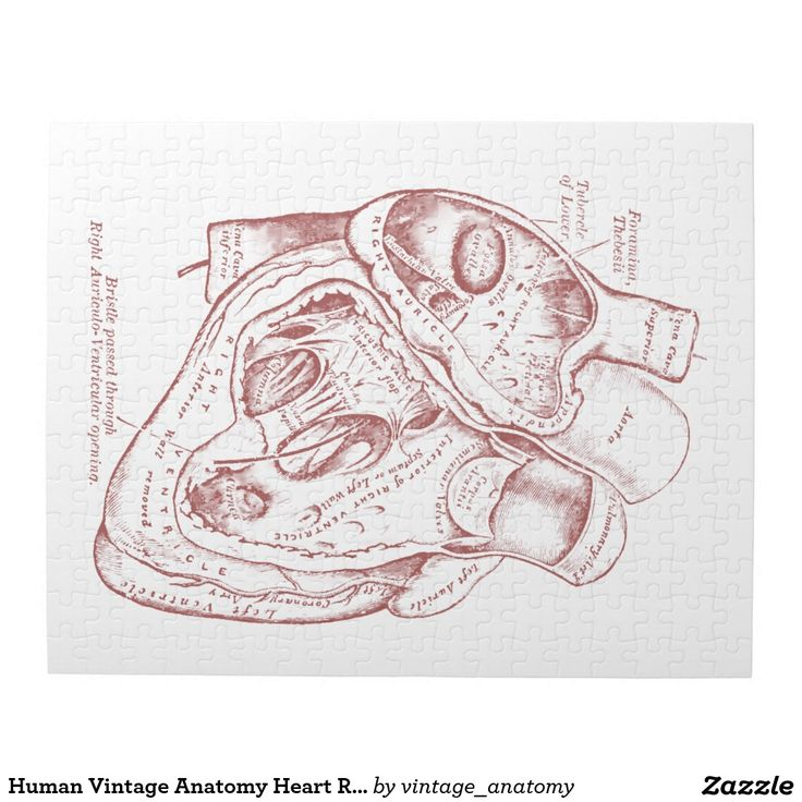 Anatomy jigsaw puzzles