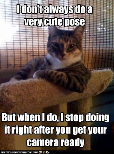 The Most Interesting Cat in the World - You'll Never Get a Picture to Cheezburger!