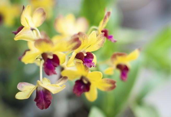 Kudy z nudy - Orchideje – královny opylovacích triků - výstava ve Fata Morganě