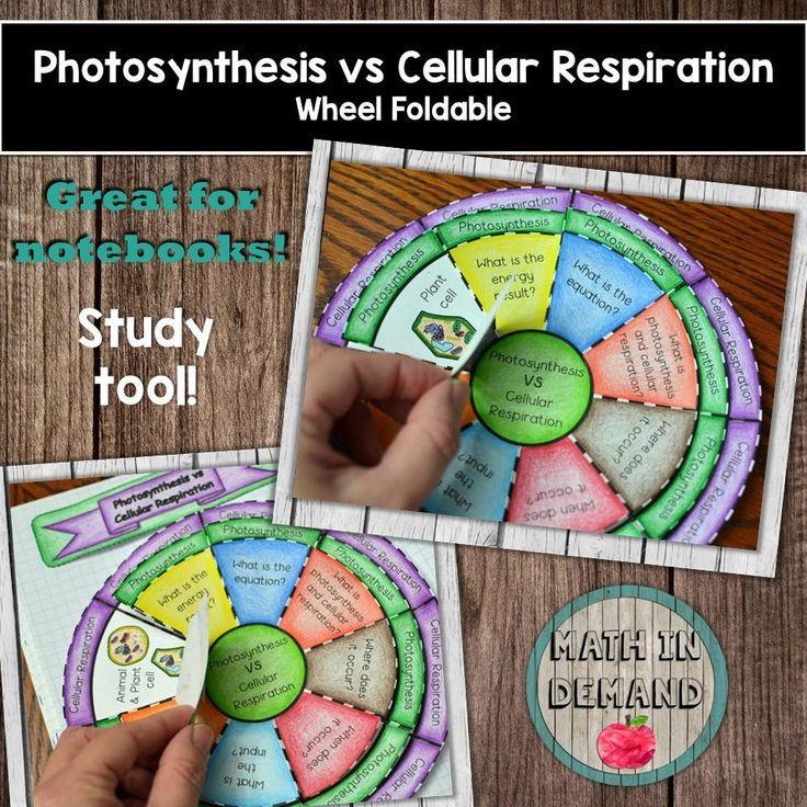 Photosynthesis drawing photosynthesis drawing