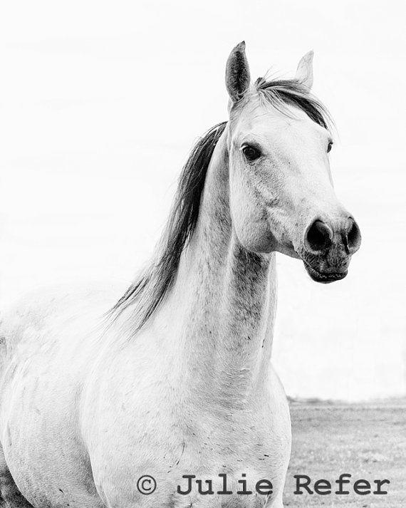 Horse Photography Black and White Horse Photo