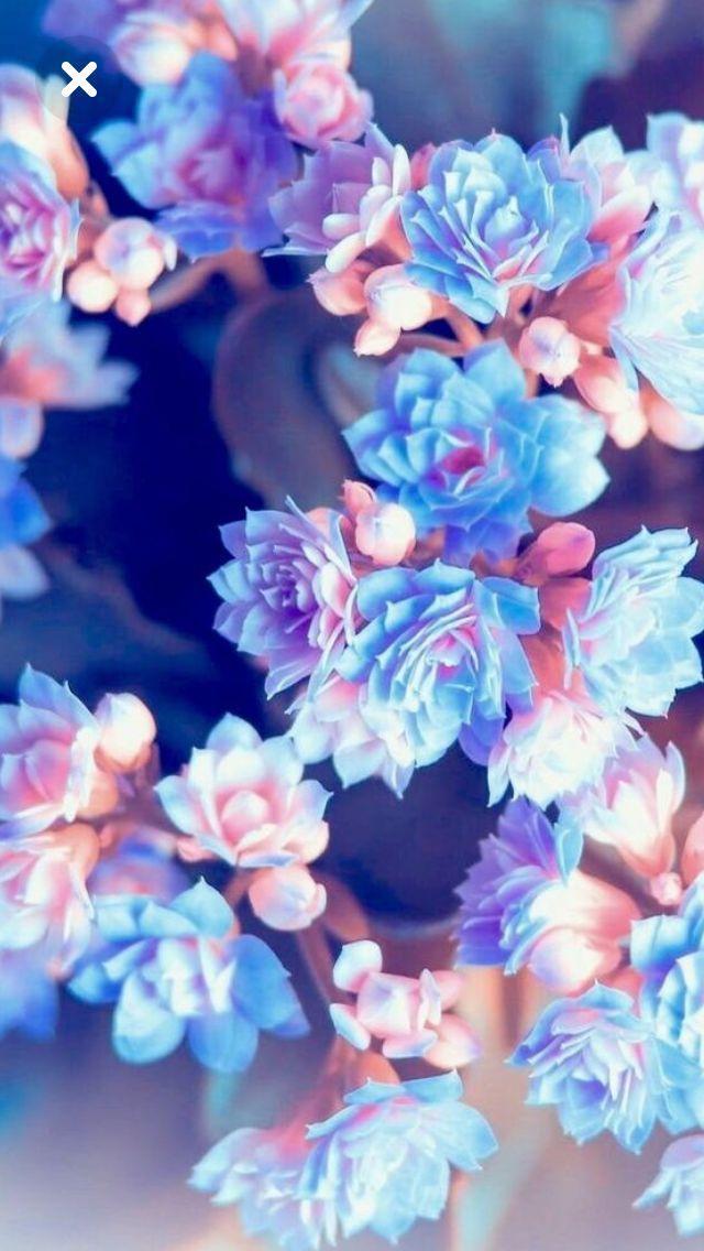 Summer blossoms – #blossoms #fondos #Summer
