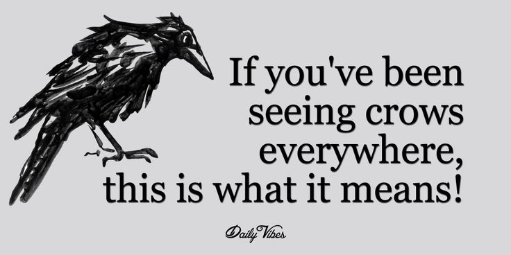 Crows are incredibly intelligent creatures. In fact, their brain/body size ratio is the same as that of a chimpanzee; and we all know how...