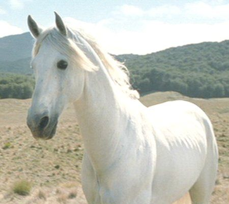 Shadowfax - Lord of the Rings Wiki