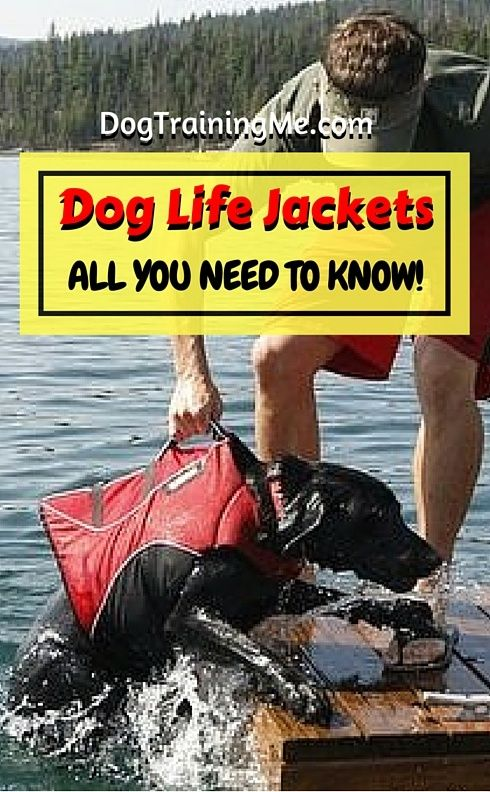 Dog life jacket tips and more. Learn which life jacket for dogs is best for your size of pup. Watch a video on safely fitting your dog's life jacket and more in this article!