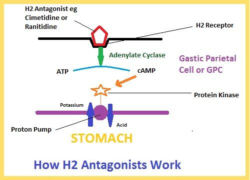 How H2 Antagonist Drugs Work  www.refluxy.com