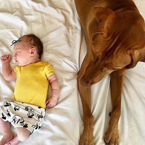 Lil' baby Gwen and Vizsla sister Clemmy. We love this photo, thanks to Mommy @shermanandclem for sharing it!   Vizsla baby shorties in our Etsy shop, link in bio.    #monofaces