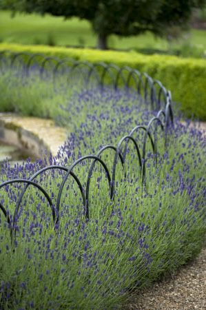 A circular lavender bed and arched railings around a lily pool in the garden at Felbrigg Hall, Norfolk