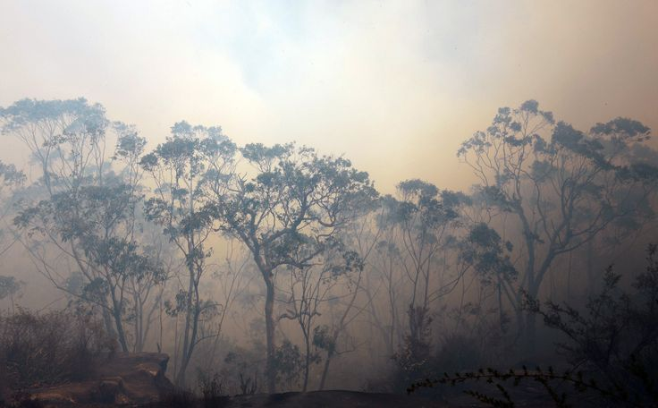 """fotojournalismus: """" Thick smoke from a bush fire fills the sky near Faulconbridge in the Blue Mountains on October 24, 2013. [Credit : Saeed Khan/AFP/Getty Images] """""""