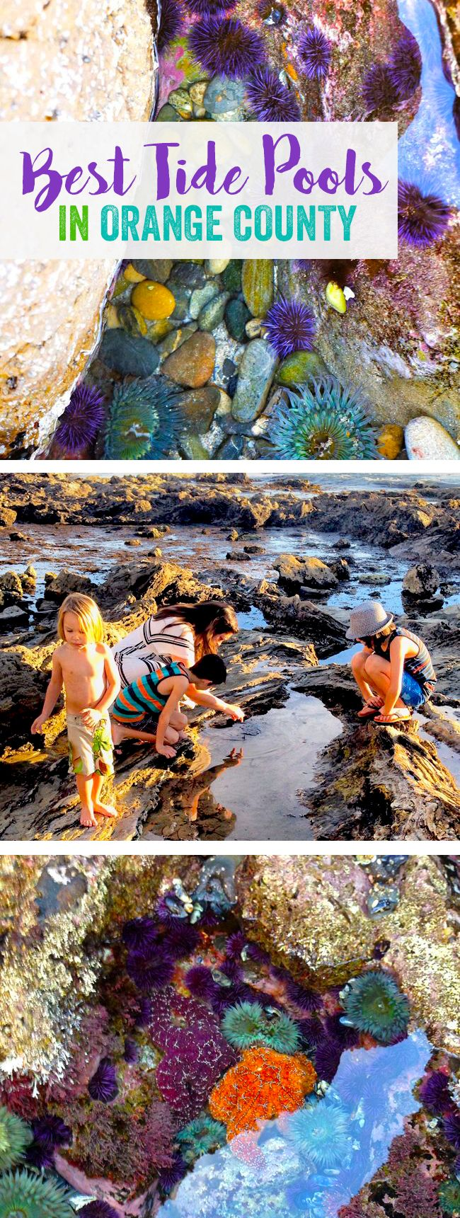 7 Family-friendly tide pools in Orange County, California.