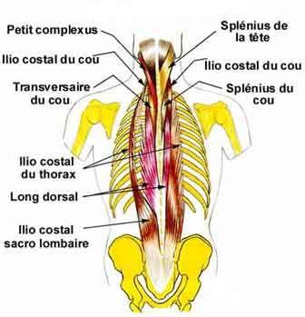 Les dorsalgies à la grossesse du médicament