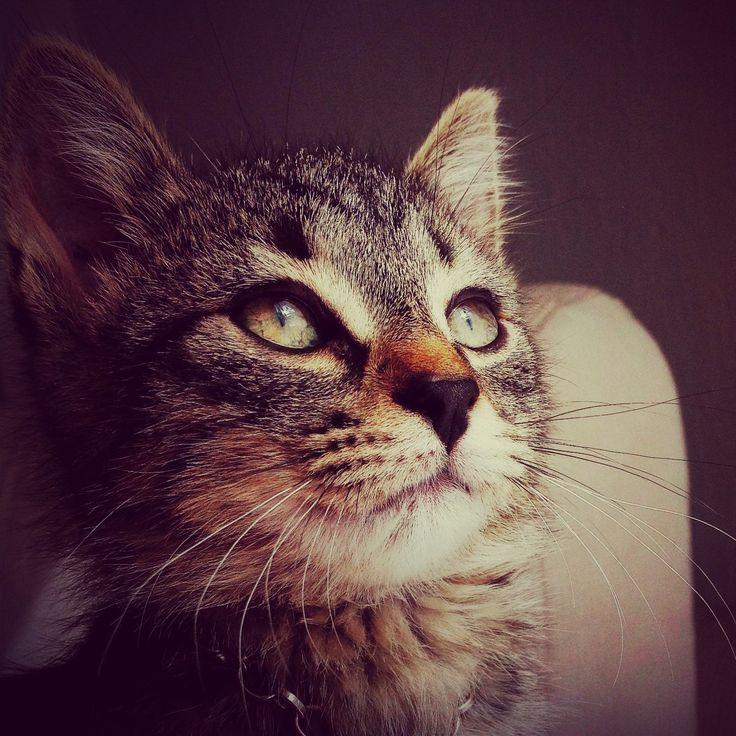 #Abril #Cat